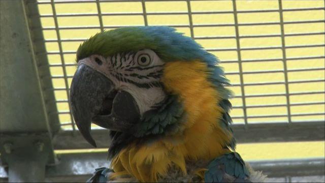 Visite de la Clinique des oiseaux à Baden