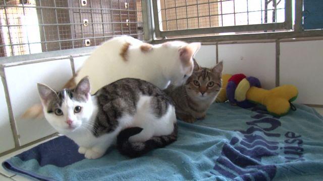 De jolis petits chats à adopter