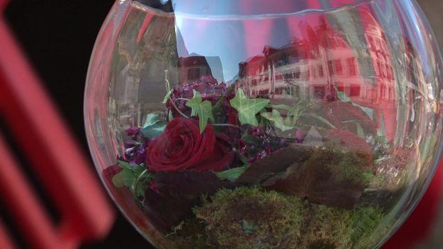 Les roses aussi ont leur festival