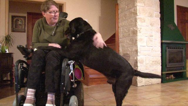 Des chevaux et des chiens pour aider les handicapés