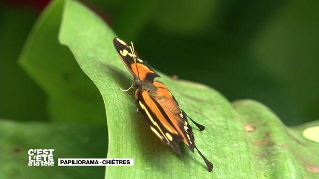 La Télé prend son envol au Papiliorama de Chiètres