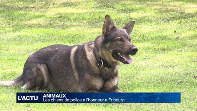 Le policier et son chien, un duo inséparable