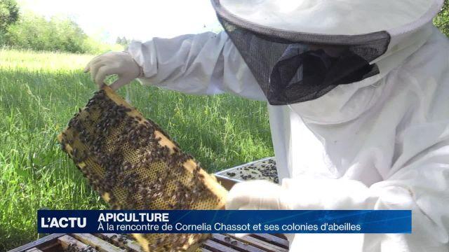 Rencontre avec Cornelia Chassot et ses colonies d'abeilles