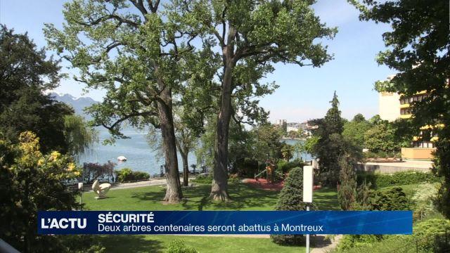 Deux arbres centenaires seront abattus à Montreux