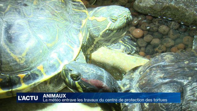 Les tortues aiment l'eau, les chantiers moins