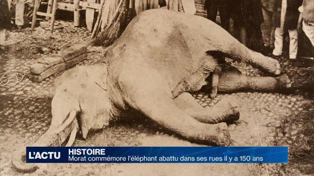 Morat célèbre son éléphant mort il y a 150 ans