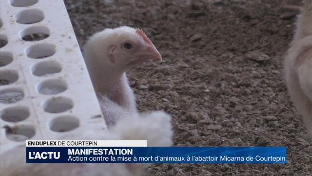 Action contre la mise à mort d'animaux à l'abattoir Micarna