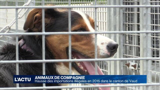 Les importations illégales d'animaux en hausse