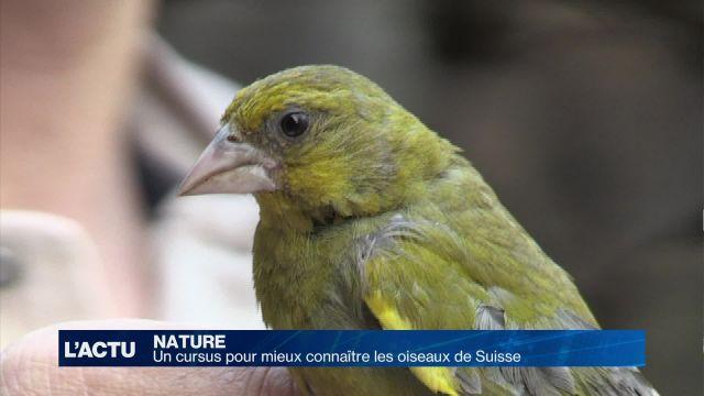 Un cursus pour mieux connaître les oiseaux de Suisse
