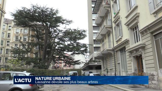 Lausanne dévoile ses plus beaux arbres