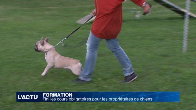 Fini les cours obligatoires pour les propriétaires de chiens