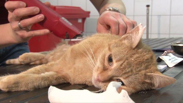 Une campagne de stérilisation des chats de ferme