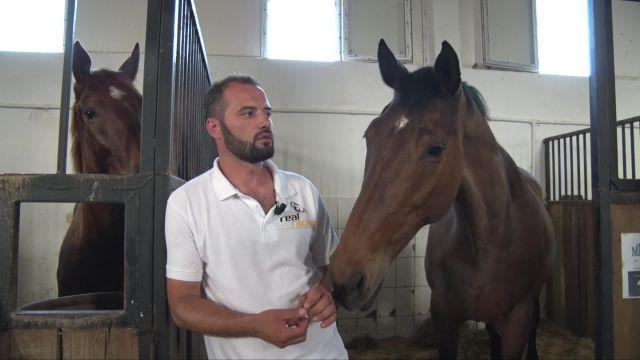 Les chevaux sauvages du Delta du Danube