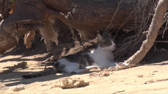 La plage aux Chats