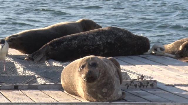 Centre pour mammifères marins
