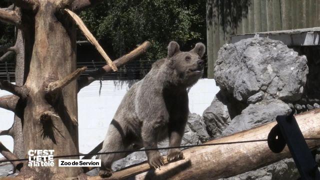 C'est l'été à la Télé vous emmène au zoo de Servion