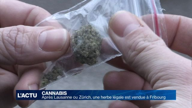 Le cannabis légal est arrivé à Fribourg