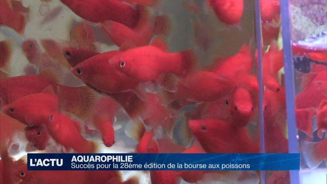 Les passionnés de poissons avaient rendez-vous à Lausanne