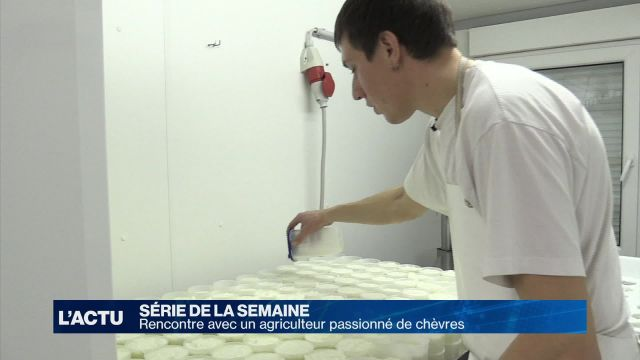 De la traite à la production de fromage frais