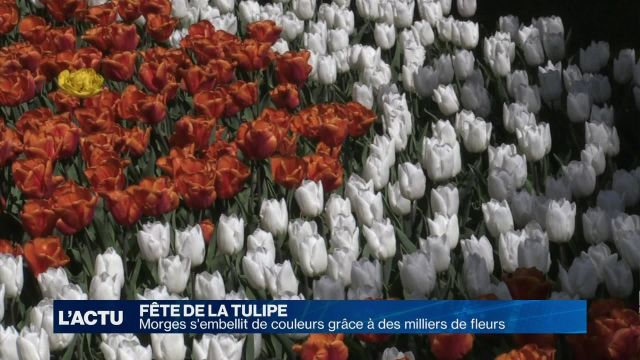 Morges s'embellit de couleurs grâce à des milliers de fleurs