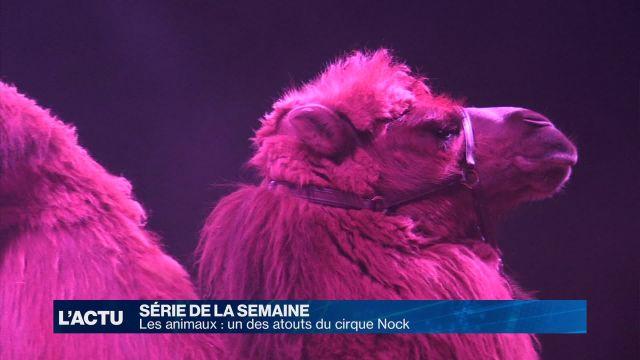 Les animaux, un des atouts du cirque Nock