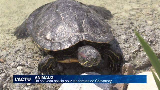 Un nouveau bassin pour les tortues de Chavornay