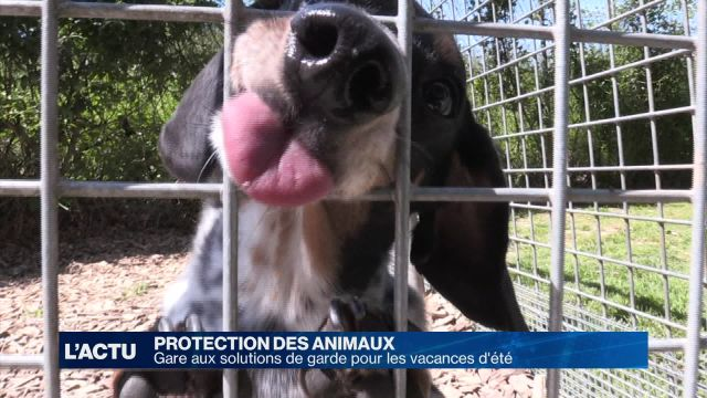 Gare aux solutions de garde pour animaux cet été