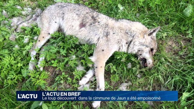 Le loup découvert dans la commune de Jaun a été empoisonné
