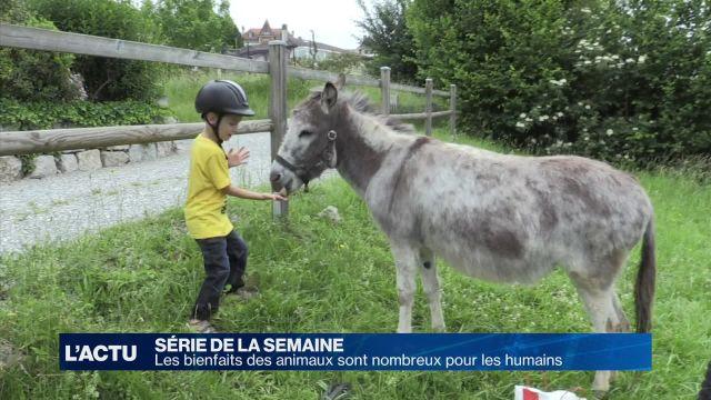 Zoothérapie : les bienfaits des animaux sont nombreux