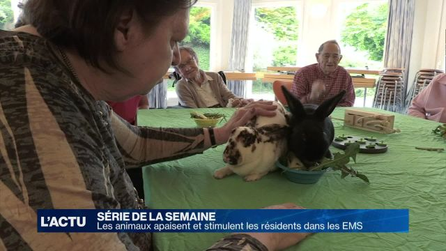 Les animaux apaisent et stimulent les résidents d'un EMS