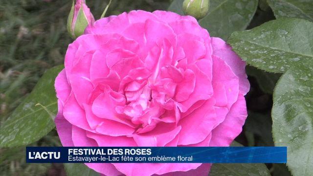 Estavayer-le-Lac fête son emblème floral