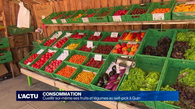 Cueillir soi-même fruits et légumes au self-pick Schiffenen