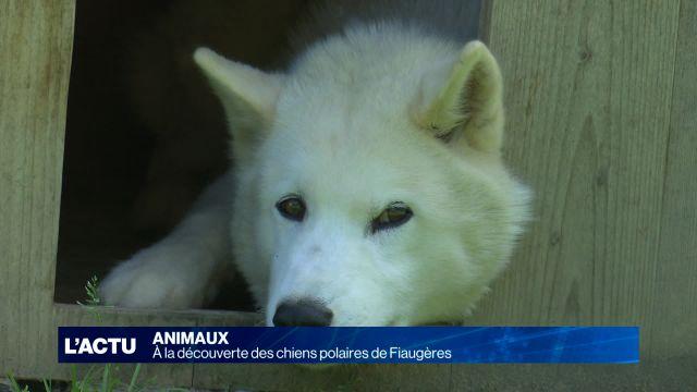 A la rencontre des chiens polaires de Fiaugères