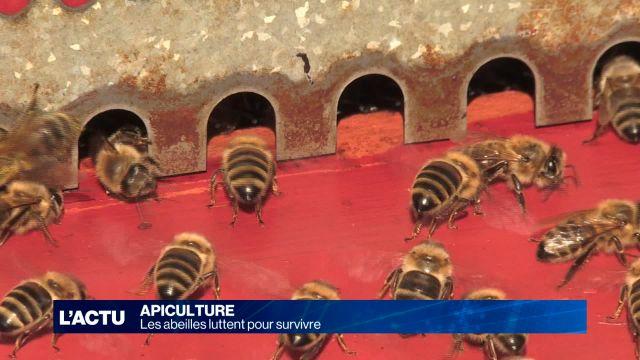 Les abeilles luttent pour survivre