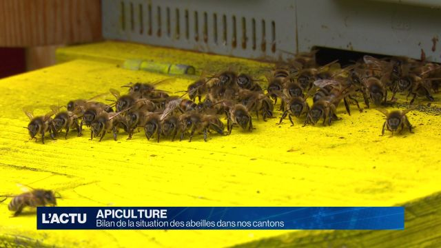 Bilan de la situation des abeilles dans nos cantons