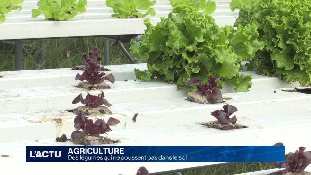 Des légumes qui ne poussent pas dans le sol