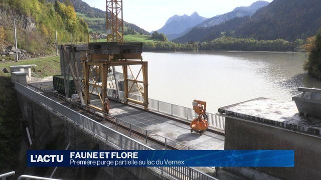 Première purge partielle au lac du Vernex