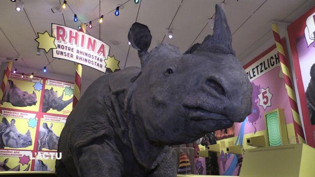 e rhinocéros est à l'honneur au MHNF