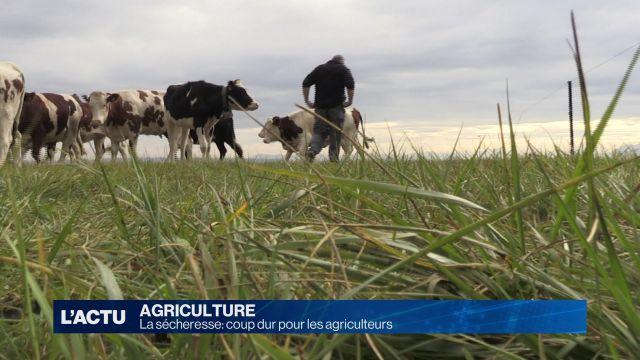 La sécheresse: coup dur pour les agriculteurs