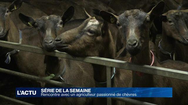 Un jeune agriculteur se consacre à sa passion: les chèvres
