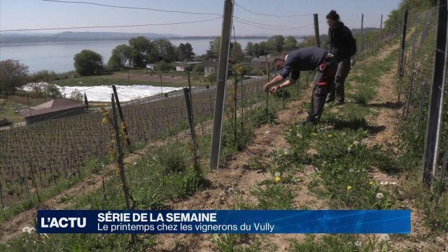 Le printemps chez les vignerons du Vully