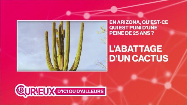25 ans de prison pour l'abattage d'un cactus en Arizona