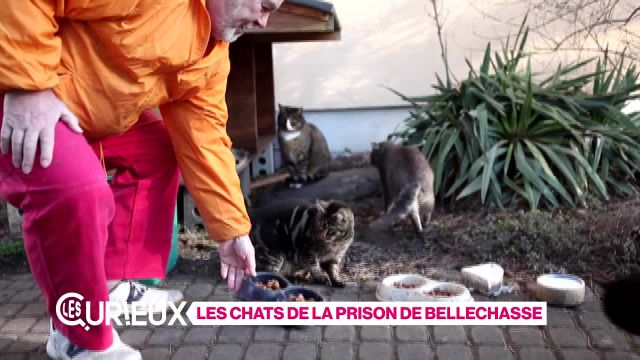 Les Chats de Bellechasse