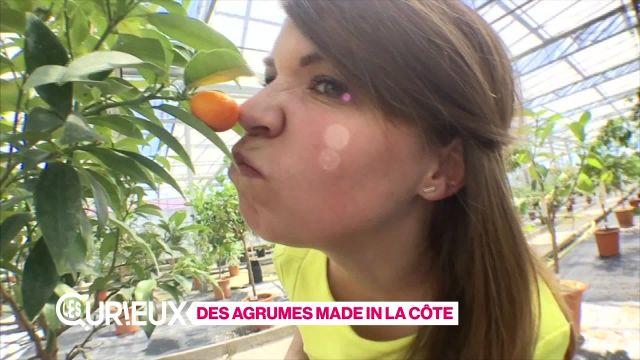 Des agrumes made in La Côte