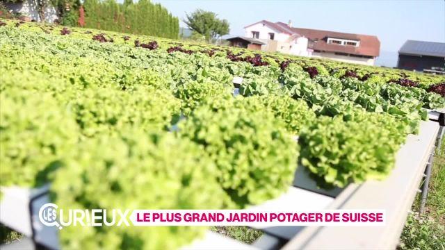 Le plus grand jardin potager de Suisse