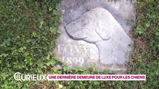 Un cimetière pour chiens de luxe