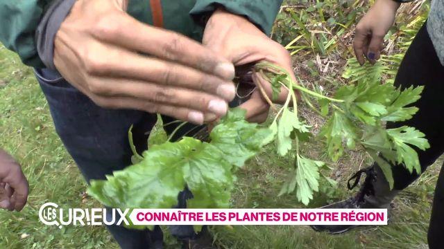 Reconnaître les plantes de notre région