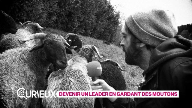 Devenir un leader en gardant des moutons