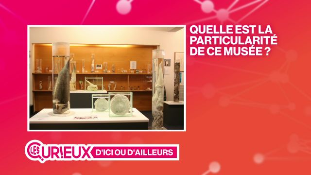 Un musée rempli de phallus