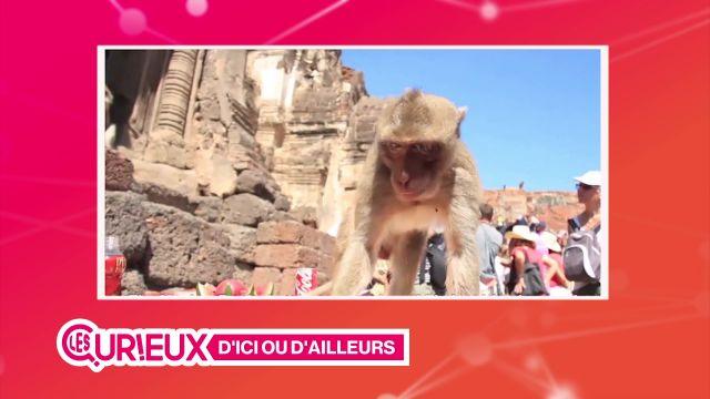 Un festival thaïlandais réservé aux singes